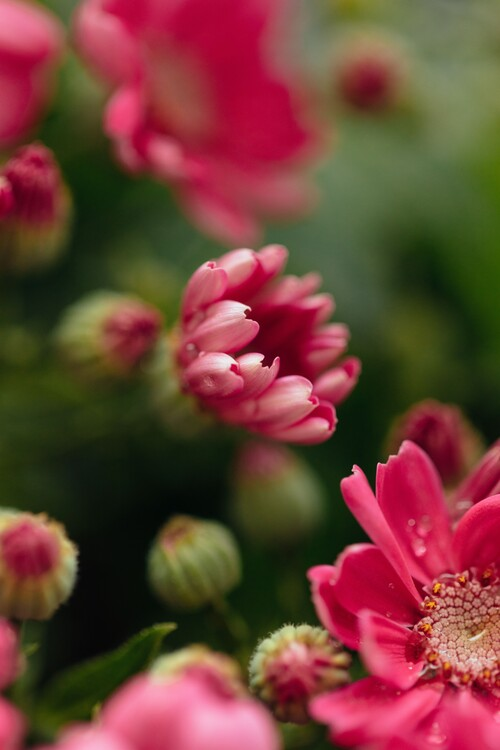 Ekskluzivna fotografska umetnost Beauty or red flowers