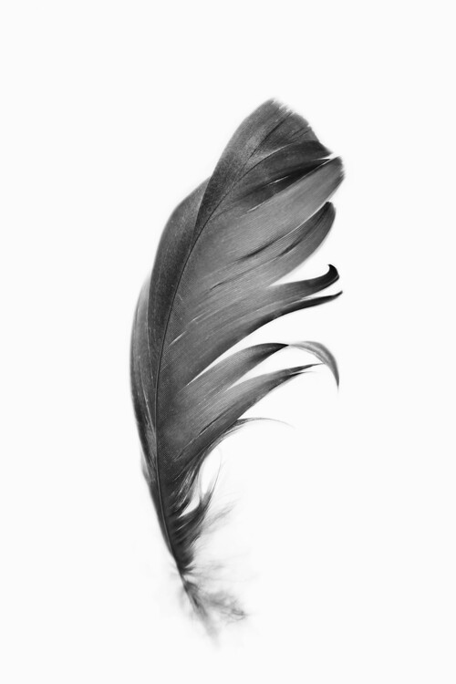 Ekskluzivna fotografska umetnost Black feather
