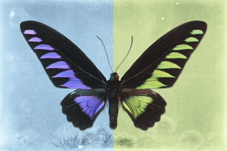 Ekskluzivna fotografska umetnost BROOKIANA PROFIL - SKYBLUE & LIME GREEN