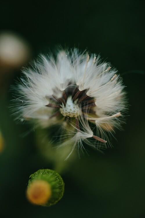 Ekskluzivna fotografska umetnost Dandelion inside the forest