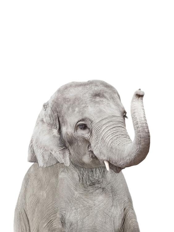 Ekskluzivna fotografska umetnost Elephant 2