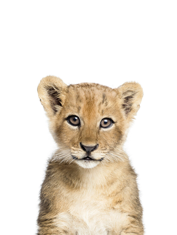 Ekskluzivna fotografska umetnost Lion 1