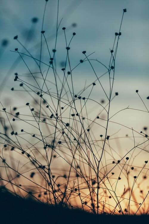 Ekskluzivna fotografska umetnost Plants and flowers at golden hour