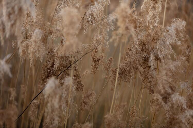 Ekskluzivna fotografska umetnost Plants and flowers