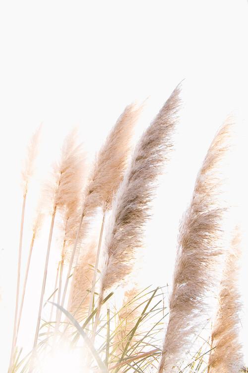 Ekskluzivna fotografska umetnost Reed 1