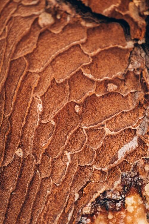 Ekskluzivna fotografska umetnost Texture from the forest