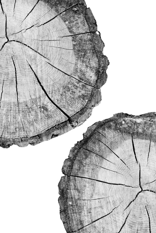 Ekskluzivna fotografska umetnost Tree