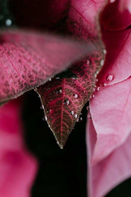 Ekskluzivna fotografska umetnost Beautiful detail of pink flowers