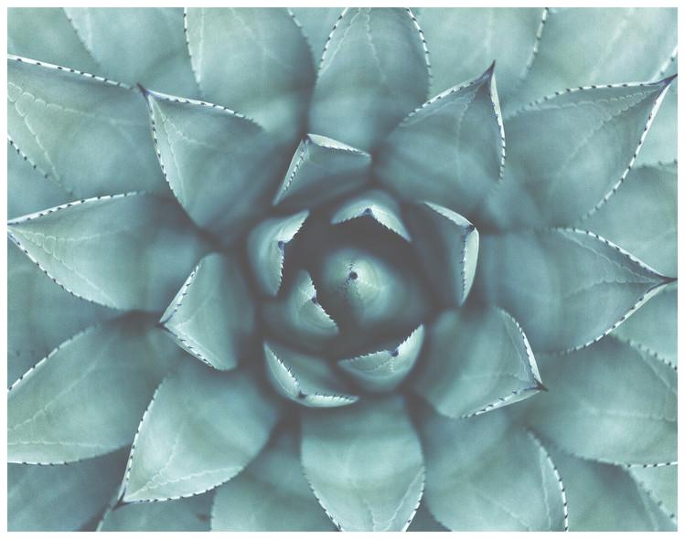 Ekskluzivna fotografska umetnost Border succulent green