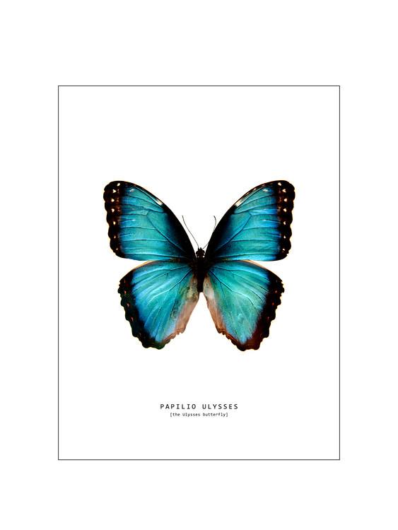 Ekskluzivna fotografska umetnost butterfly