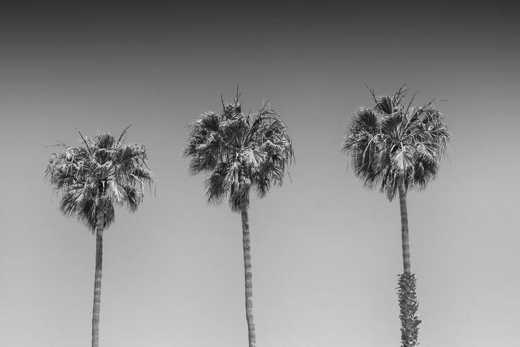 Ekskluzivna fotografska umetnost Minimalistic Palm Trees