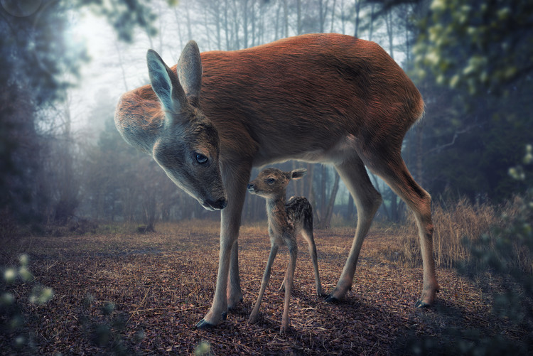 Ekskluzivna fotografska umetnost Mother and Fawn