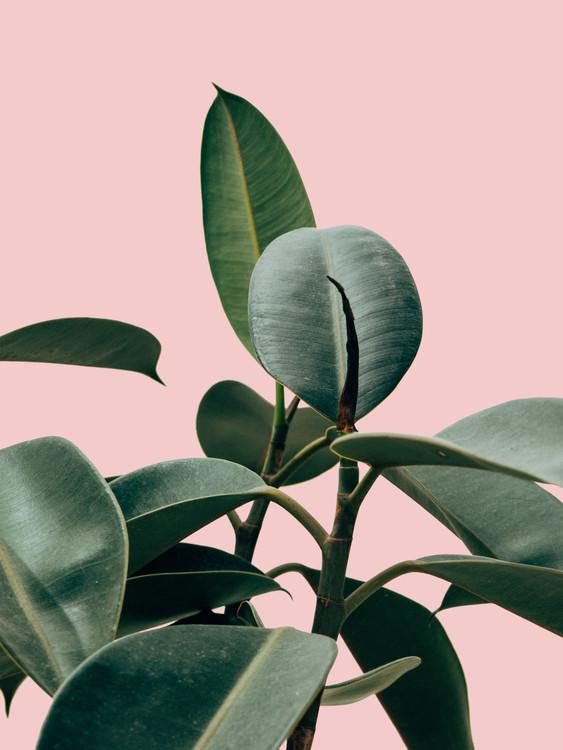 Ekskluzivna fotografska umetnost pinkpalm2