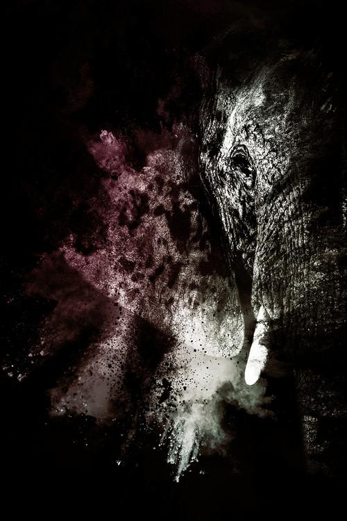 Ekskluzivna fotografska umetnost The Elephant