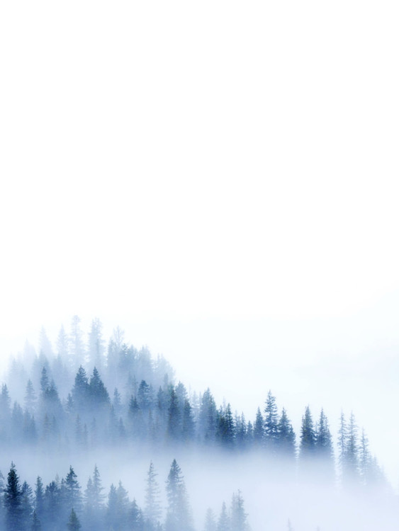 Ekskluzivna fotografska umetnost treeblue2
