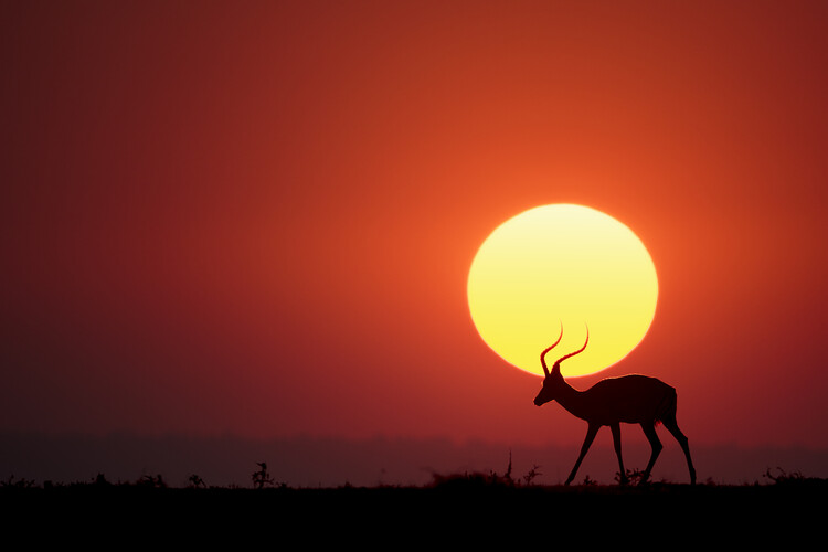Fotomural An African Sunset