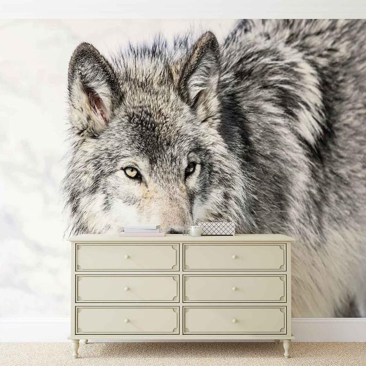 Fotomural Animal lobo