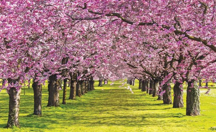 Fotomurale Árboles con flores