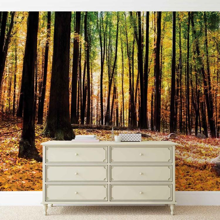 Fotomurale  Bosques bosques