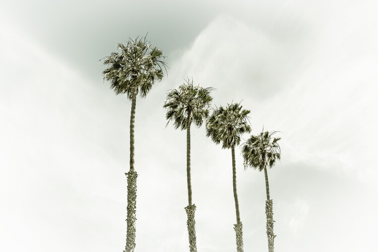 Fotomural Coastal Palm Trees | Vintage