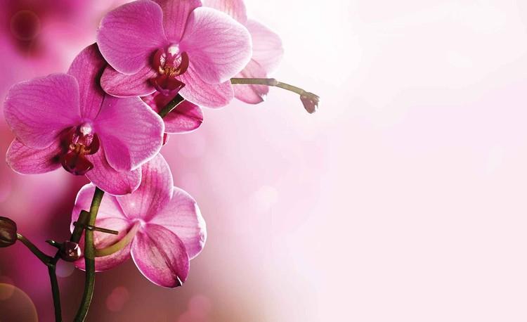 Fotomural Flores