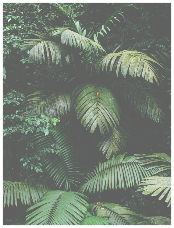 Fotomural green leaves large