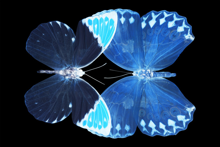 Fotomural MISS BUTTERFLY DUO FORMOIA - X-RAY Black Edition