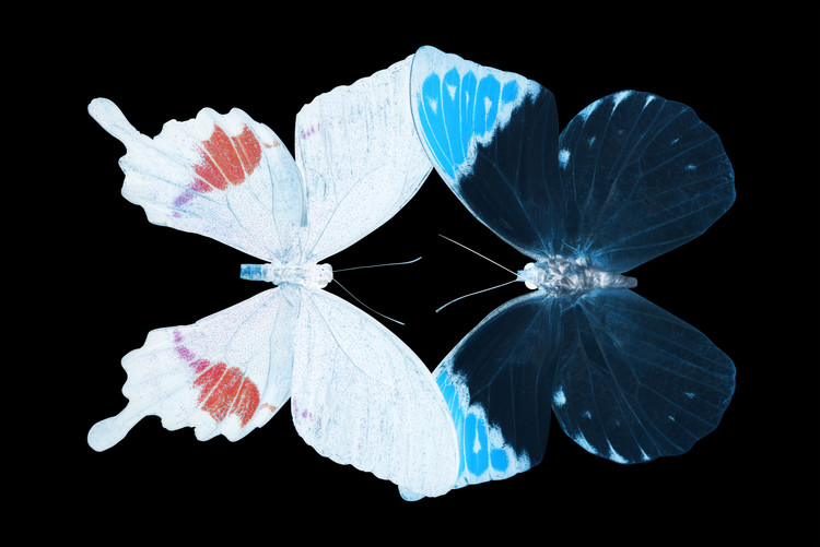 Fotomural MISS BUTTERFLY DUO HERMOSANA - X-RAY Black Edition