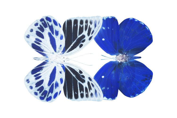 Fotomural MISS BUTTERFLY DUO PRIOPOMIA - X-RAY White Edition