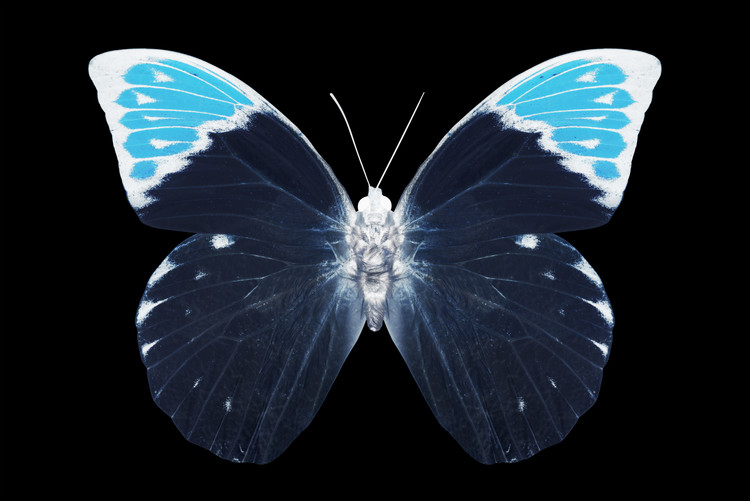 Fotomural MISS BUTTERFLY HEBOMOIA - X-RAY Black Edition