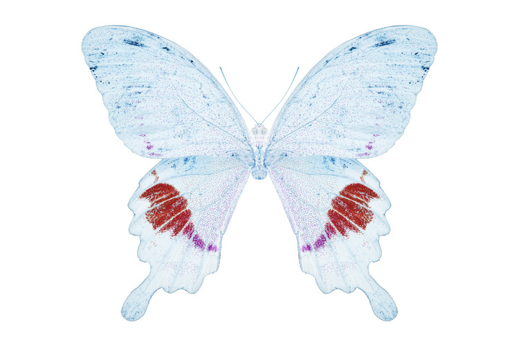 Fotomural MISS BUTTERFLY HERMOSANUS - X-RAY White Edition