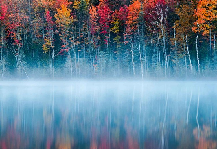 Fotomural  Morning Reflection
