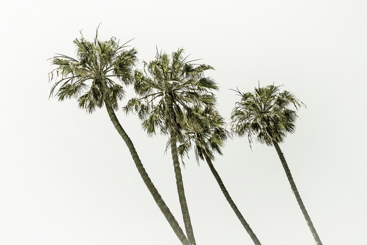 Fotomural Palm trees by the sea | Vintage