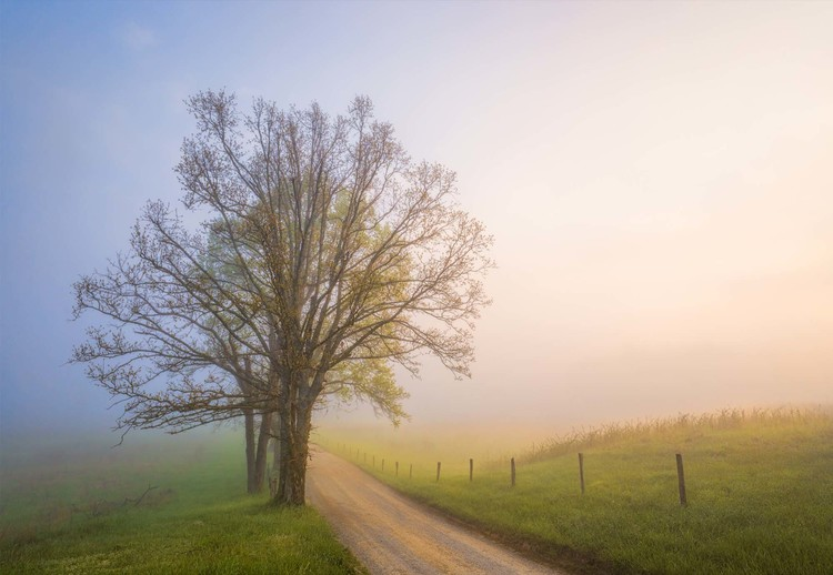 Fotomural Silence Of Days