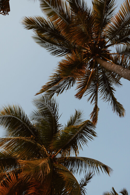 Fotomural Sky of palms