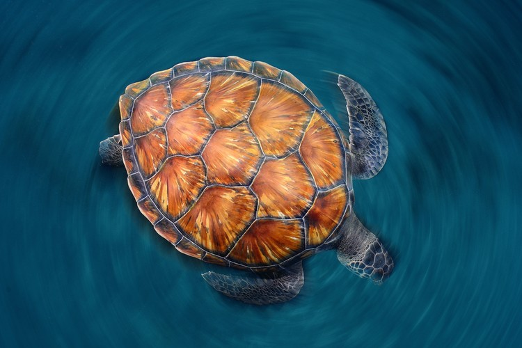 Fotomural Spin Turtle