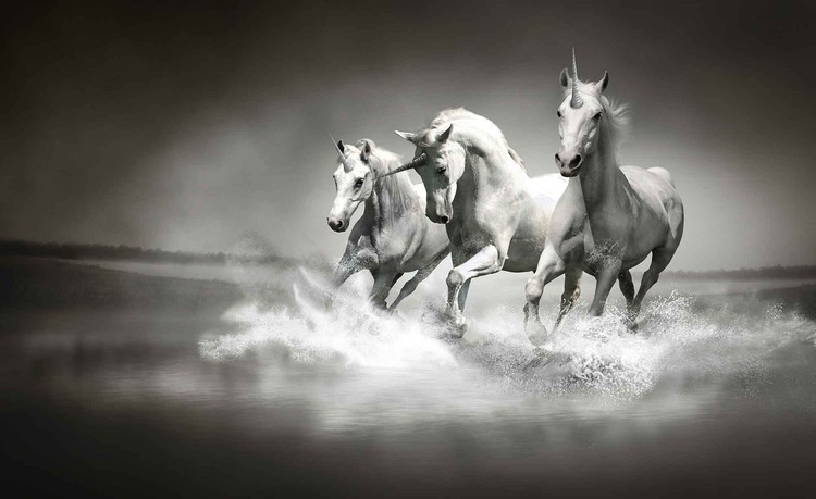 Fotomural  Unicornios Caballos Negro Blanco