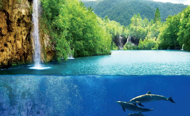 Fotomurale Waterfall Sea Nature Dolphins