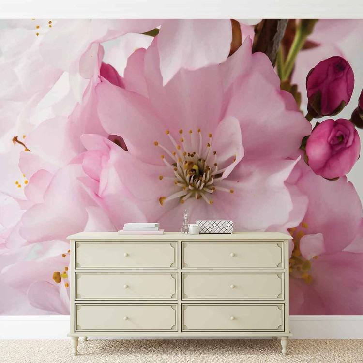 Flowers Blossoms Nature Pink Fototapet