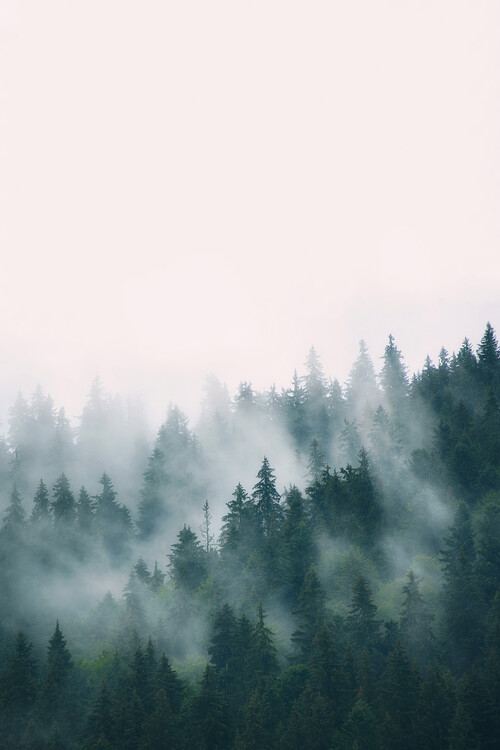 Fog and forest Fototapet