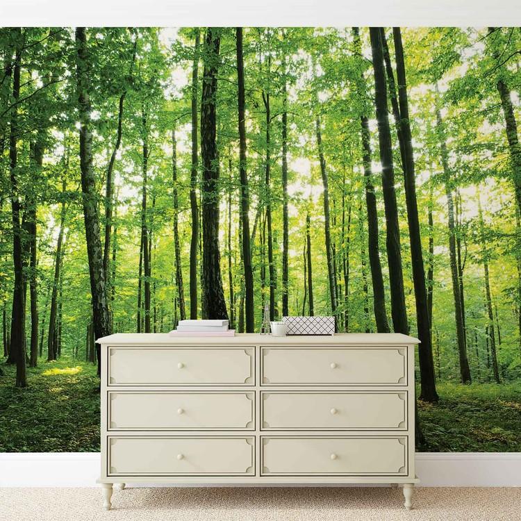 Forest Trees Green Nature Fototapet