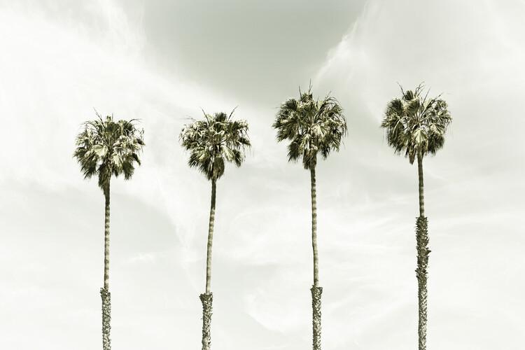 Minimalist Palm Trees | Vintage Fototapet