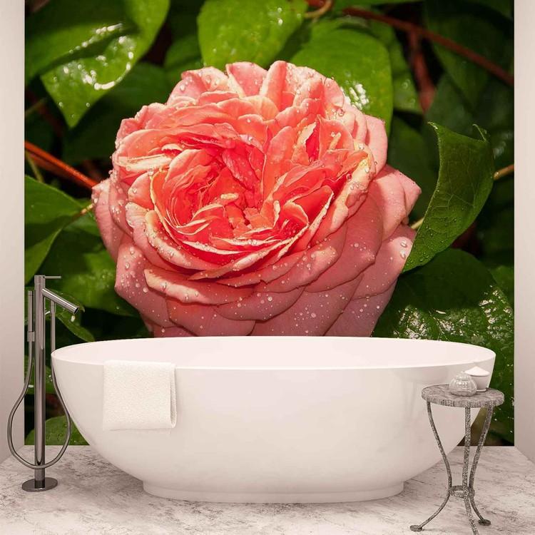 Pink Rose Fototapet
