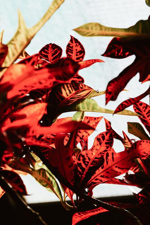 Red leaves Fototapet