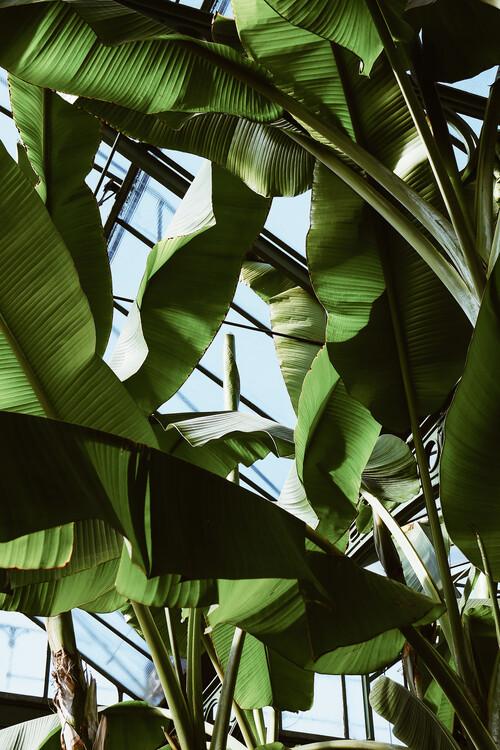 Roof of palms Fototapet