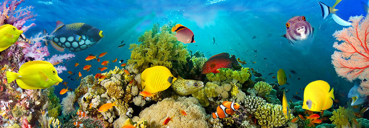 Sea Corals  Vinyl väggmålningar