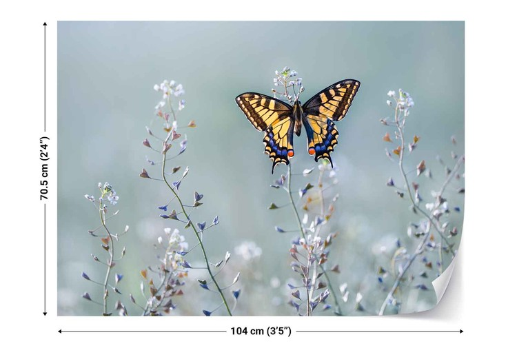 Swallowtail Beauty Fototapet