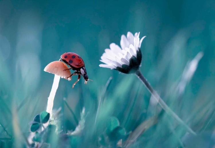 The Story Of The Lady Bug Fototapet