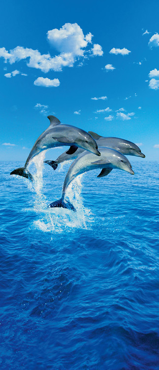 THREE DOLPHINS - steve bloom Fototapet