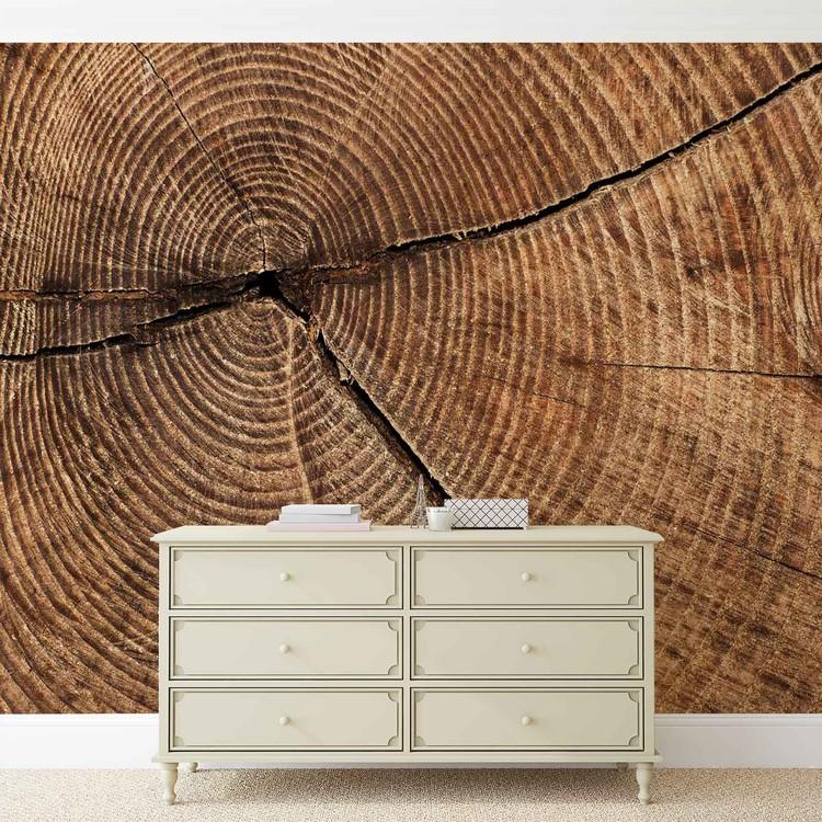 Tree Stump Rings Fototapet